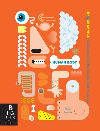 Human Body - Infographics