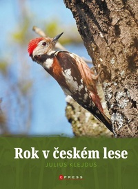 Rok v českém lese