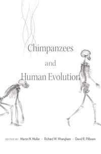 Chimpanzees and Human Evolution