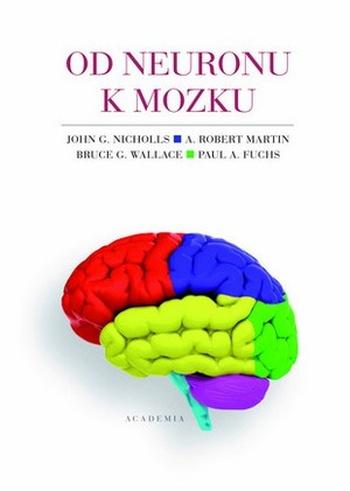 Od neuronu k mozku